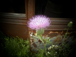flower by the window