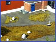 moss roof (© 2010 Tisha Clinkenbeard)