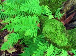 fern & moss (© 2011 Tisha Clinkenbeard)