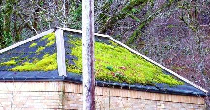 roof moss (© 2011 Tisha Clinkenbeard)