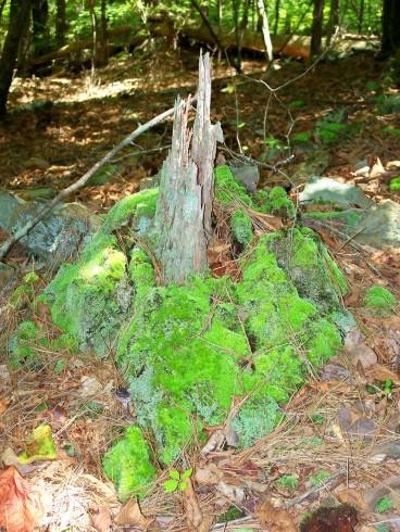 tree moss (© 2011 Tisha Clinkenbeard)