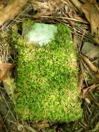green rock? (© 2011 Tisha Clinkenbeard)