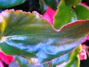 pink fringe (© 2010 Tisha Clinkenbeard)