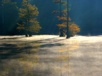 thick mist (© 2011 Tisha Clinkenbeard)