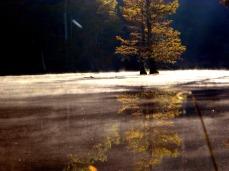 fall (© 2011 Tisha Clinkenbeard)