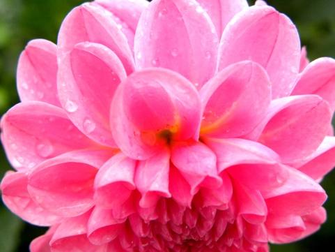 viewpoint in pink (© 2011 Tisha Clinkenbeard)