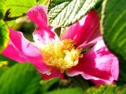 hidden pink & yellow (© 2010 Tisha Clinkenbeard)