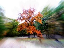 eye on the colors (© 2011 Tisha Clinkenbeard)