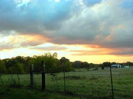 pasture (© 2011 Tisha Clinkenbeard)