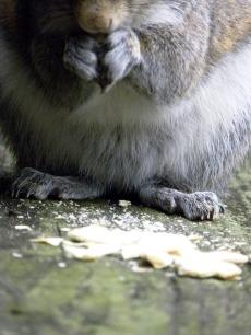 squirrel V