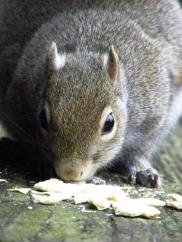 squirrel VI