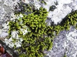 green & grey (© 2011 Tisha Clinkenbeard)
