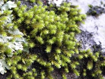 spiky moss (© 2011 Tisha Clinkenbeard)