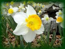 breeze in my petals (© 2011 Tisha Clinkenbeard)