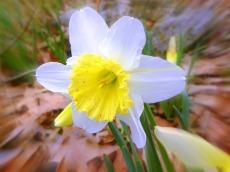 soft beauty (© 2011 Tisha Clinkenbeard)