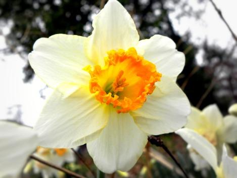 yellows (© 2011 Tisha Clinkenbeard)