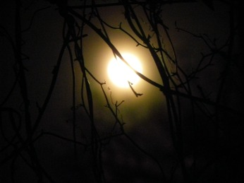 Dance Under The Moon(©2011 Tisha Clinkenbeard)