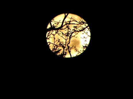 Fingers Reaching For The Moon (©2011 Tisha Clinkenbeard)