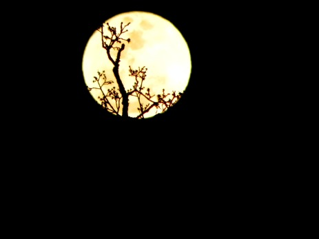 Moon Sits Atop The Tree (©2011 Tisha Clinkenbeard)