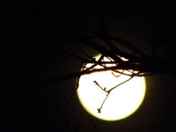 moon below the branch (©2011 Tisha Clinkenbeard)