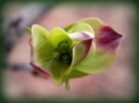 bling on the bloom (© 2011 Tisha Clinkenbeard)