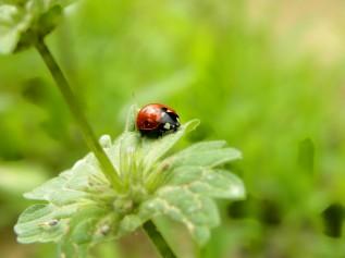 little red lady (©2011 Tisha Clinkenbeard)