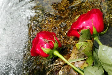 love bites (©2011 Tisha Clinkenbeard)