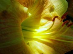 light & shadows (© 2011 Tisha Clinkenbeard)
