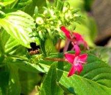 ant in the background (©2011 Tisha Clinkenbeard)
