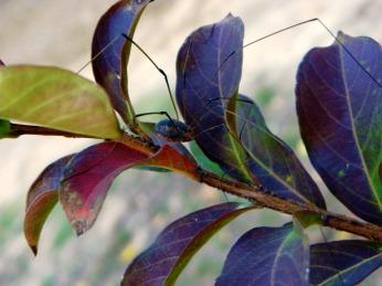 spider (©2011 Tisha Clinkenbeard)