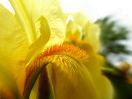 spike it up (© 2011 Tisha Clinkenbeard)