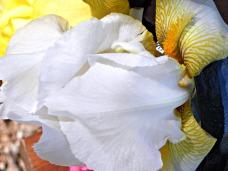 white, silk & sparkle (© 2011 Tisha Clinkenbeard)