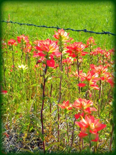 bunch of beauty (© 2011 Tisha Clinkenbeard)