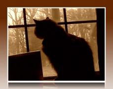 wishing for birds (©2011 Tisha Clinkenbeard)