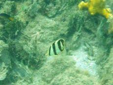 black and white fish