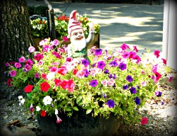 gnome in flowers