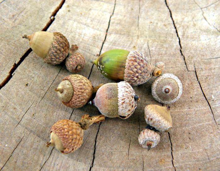 acorn view 1