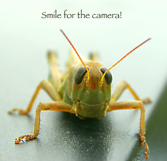 nature of the grasshopper