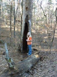 L at tree
