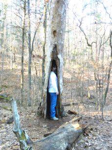 H at tree