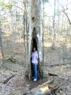 T at tree