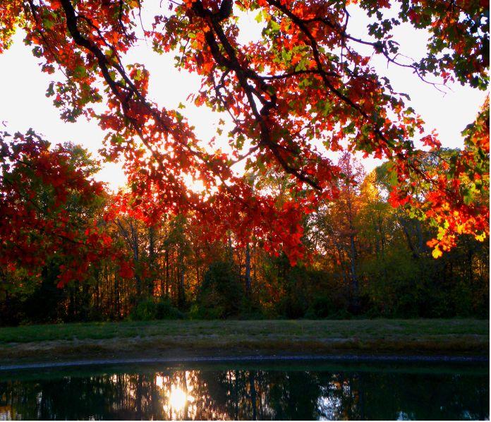 November sunset at home