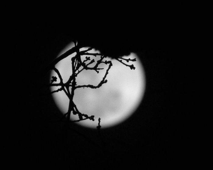 black & white moon