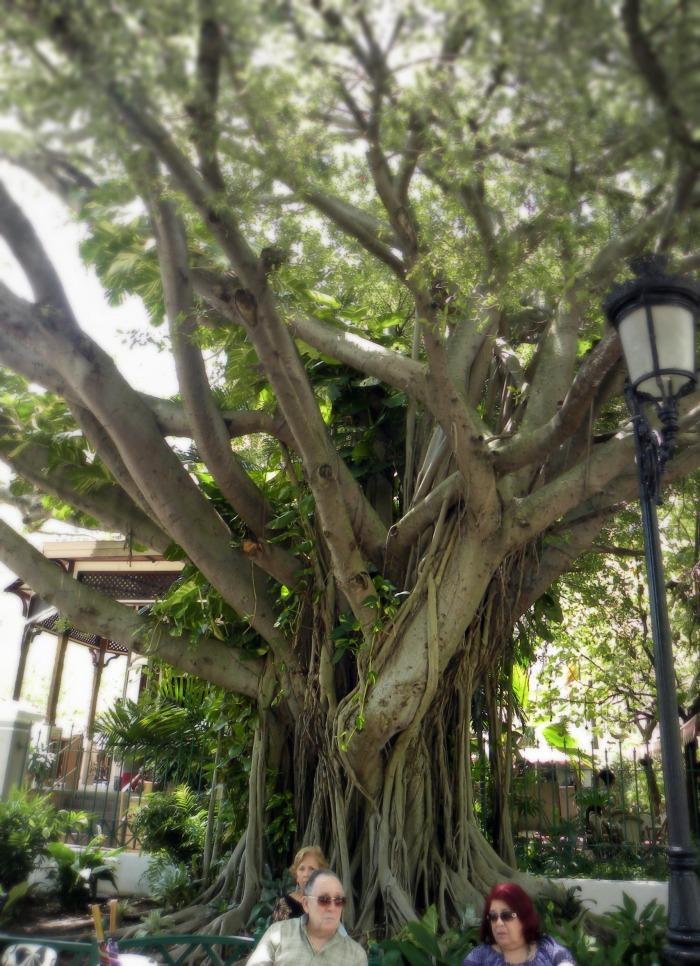 San Juan twisted tree