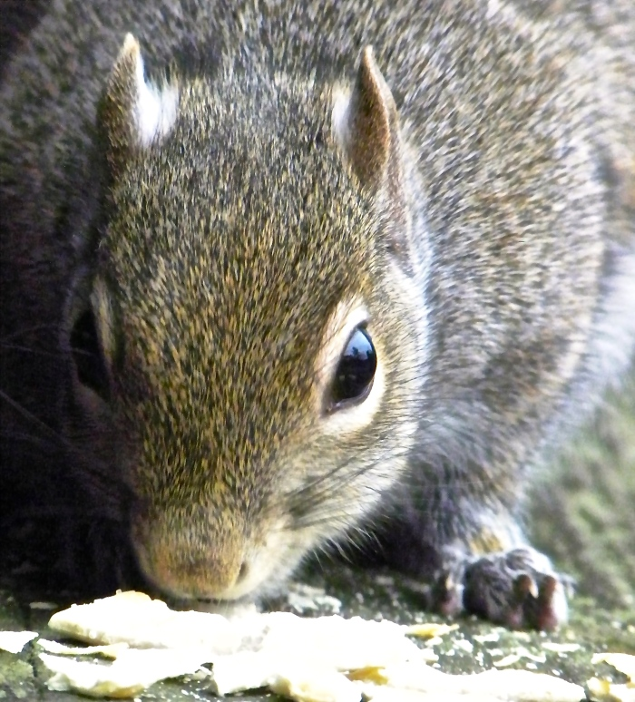 close up with a squirrel