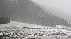 elk herd moving in the snow
