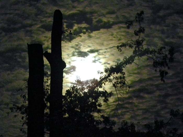 spring moon and clouds