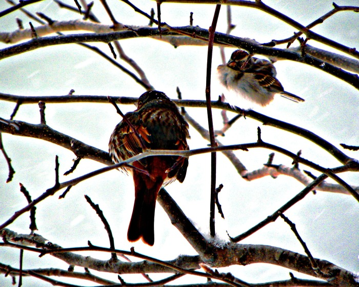birds in winter