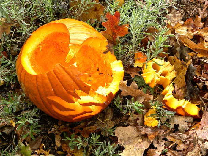 pumpky dumpty