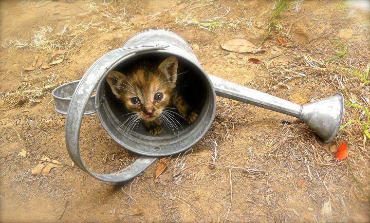 one kitten